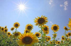 【大きいサイズのおすすめ】夏の直射日光に負けない!?おすすめショートカーディガン☆LL-5L