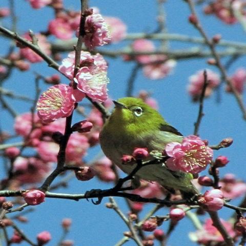 【知って得するカラー講座】季節を先取り☆立春過ぎたら春色カラーのトップスを身につけよう♪ LL-5L